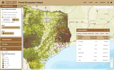 Forest Ecosystem Values